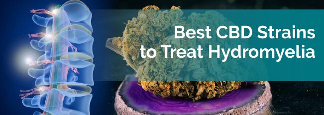 Best CBD Strains to Treat Hydromyelia