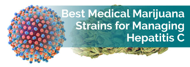 Best Medical Marijuana Strains for Managing Hepatitis C