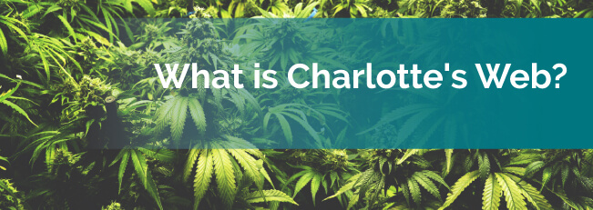 What is Charlotte's Web?
