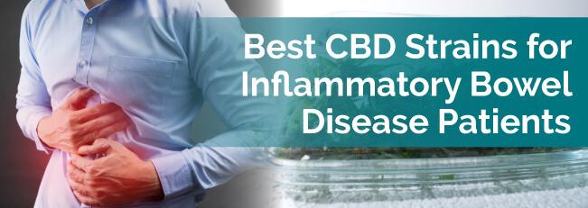 Best CBD Strains for Inflammatory Bowel Disease Patients
