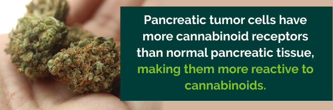 pancreatic tumor cells and cannabinoid receptors