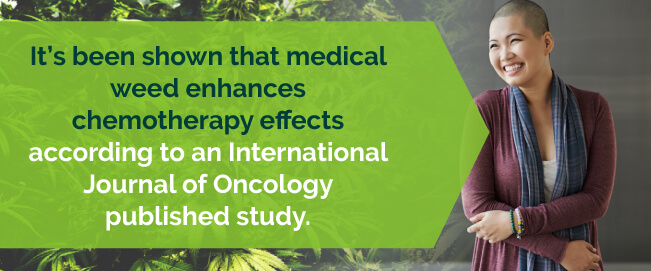 Studies show medical marijuana enhances chemo effects