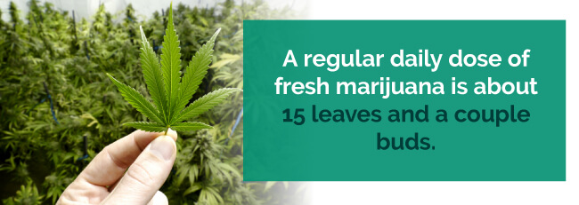 fresh marijuana leaves