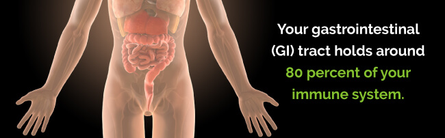 GI tract holds 80 percent of your immune system