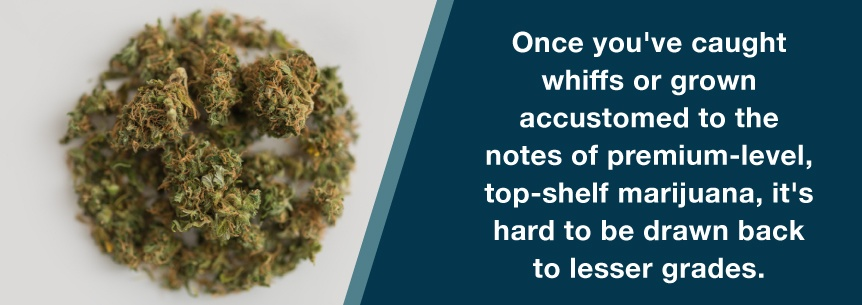 high grade weed