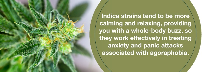 indica for agoraphobia
