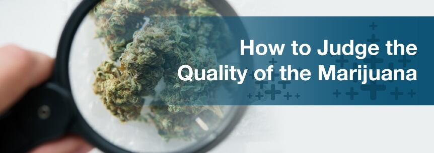 judge marijuana quality