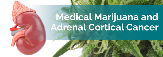 medical marijuana and adrenal cortical cancer