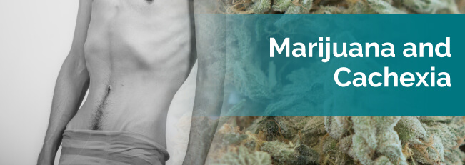Marijuana and Cachexia