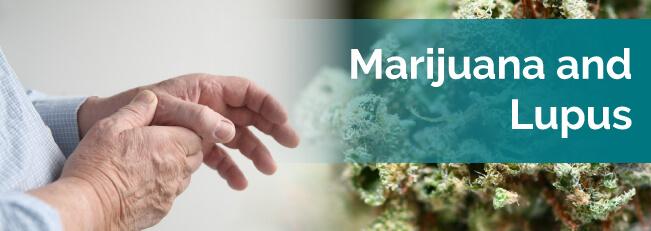 marijuana and lupus