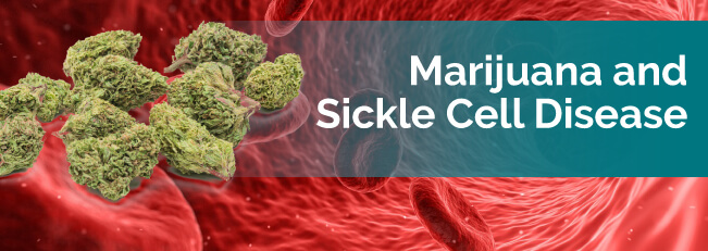 marijuana and sickle cell disease