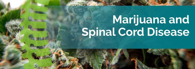 marijuana and spinal cord disease