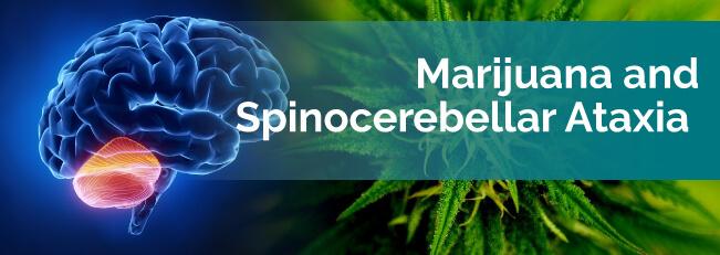 marijuana ans spinocerebellar ataxia