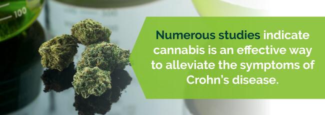 marijuana crohns studies