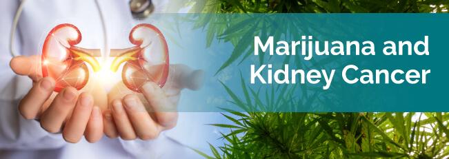 marijuana and kidney cancer