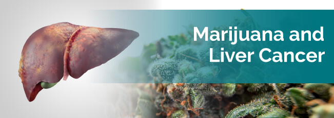 marijuana for liver cancer