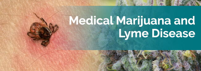 marijuana and lyme disease