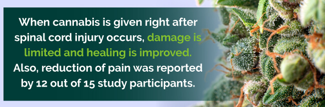 Cannabis after spinal cord injury