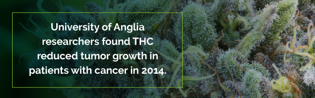 THC reduced tumor growth in cancer patients