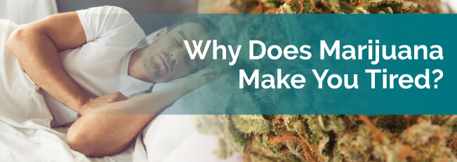 Why Does Marijuana Make You Tired?