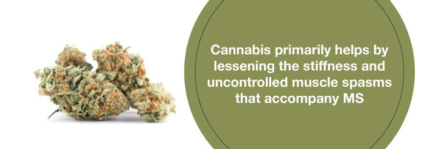 marijuana for ms