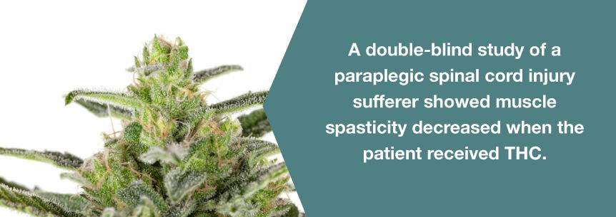 marijuana spasticity help