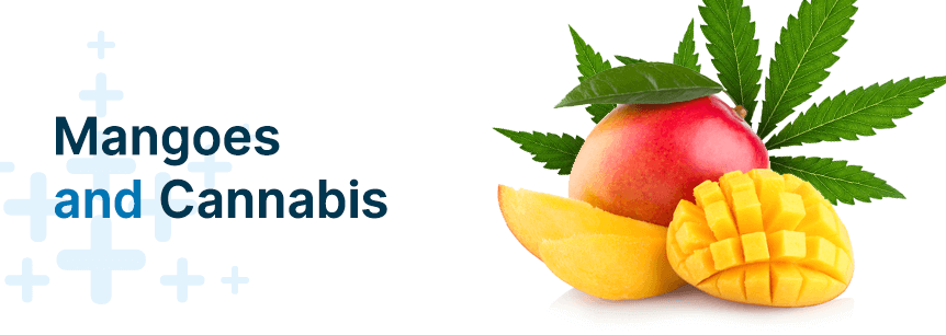 mangoes and cannabis