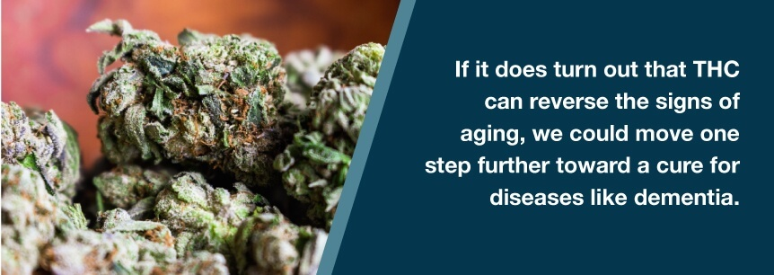 thc and aging