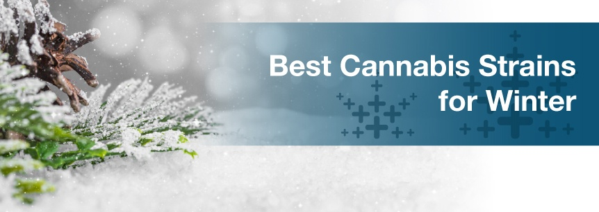 Best Cannabis Strains for Winter