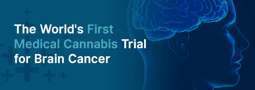 cannabis brain cancer trial