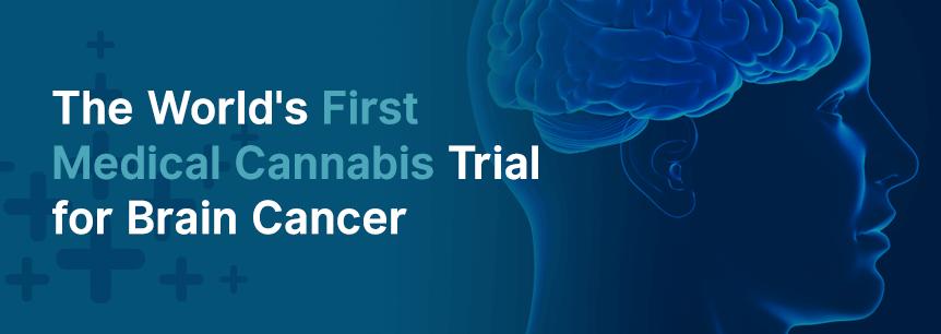 cannabis brain cancer trial