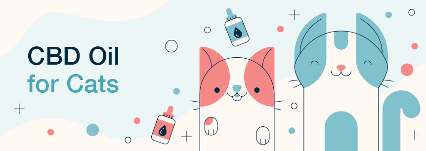CBD Oil for Cats: Your Essential Guide