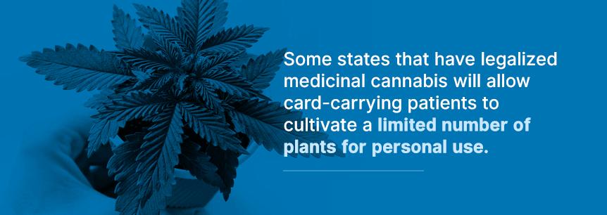grow your marijuana