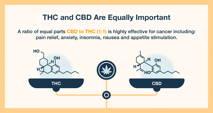 importance of CBD:THC ratio