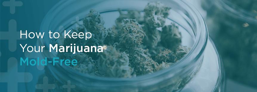 How to Keep Your Marijuana Mold-Free