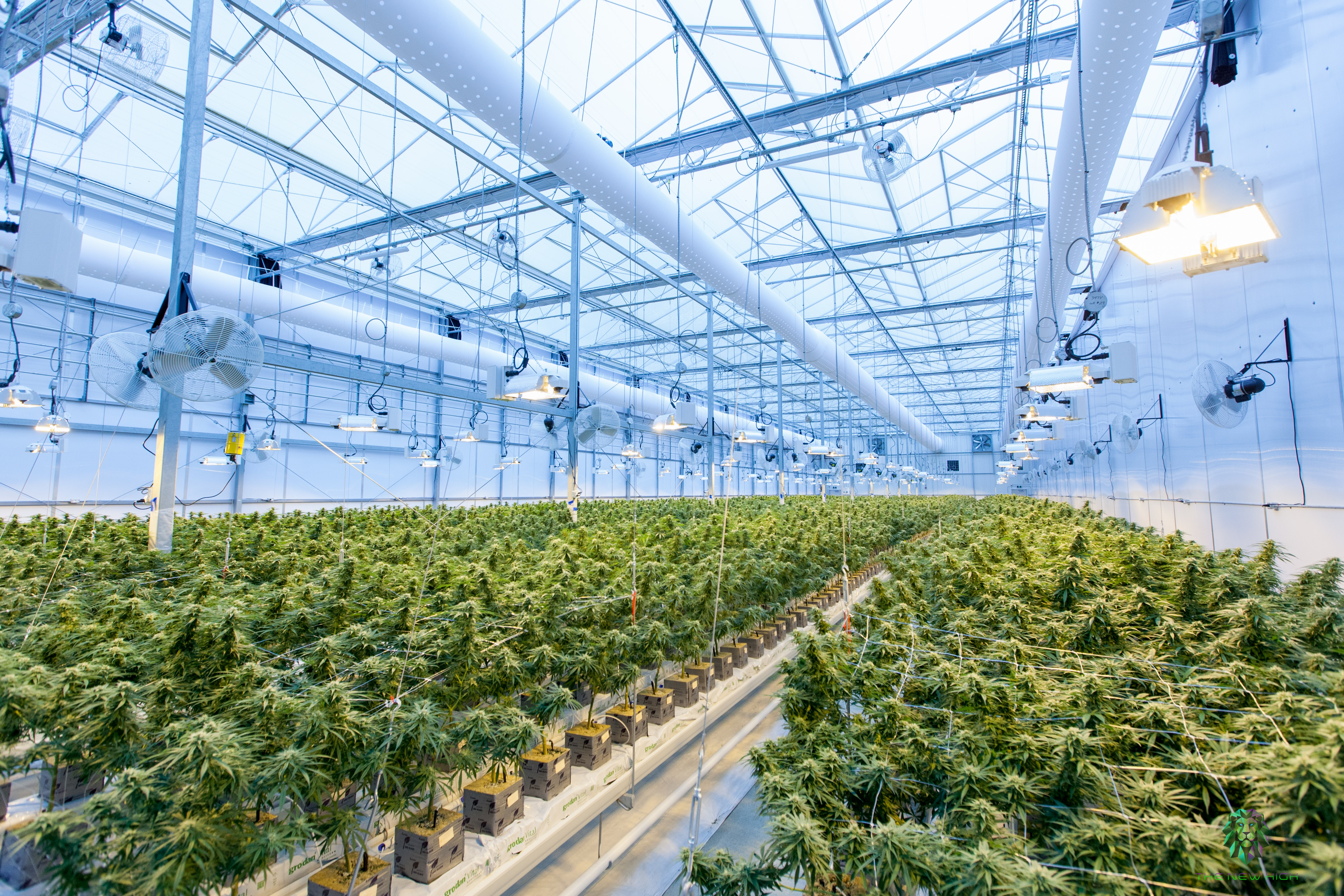 Wellcana Reduces the Price of Louisiana Wholesale Medical Marijuana