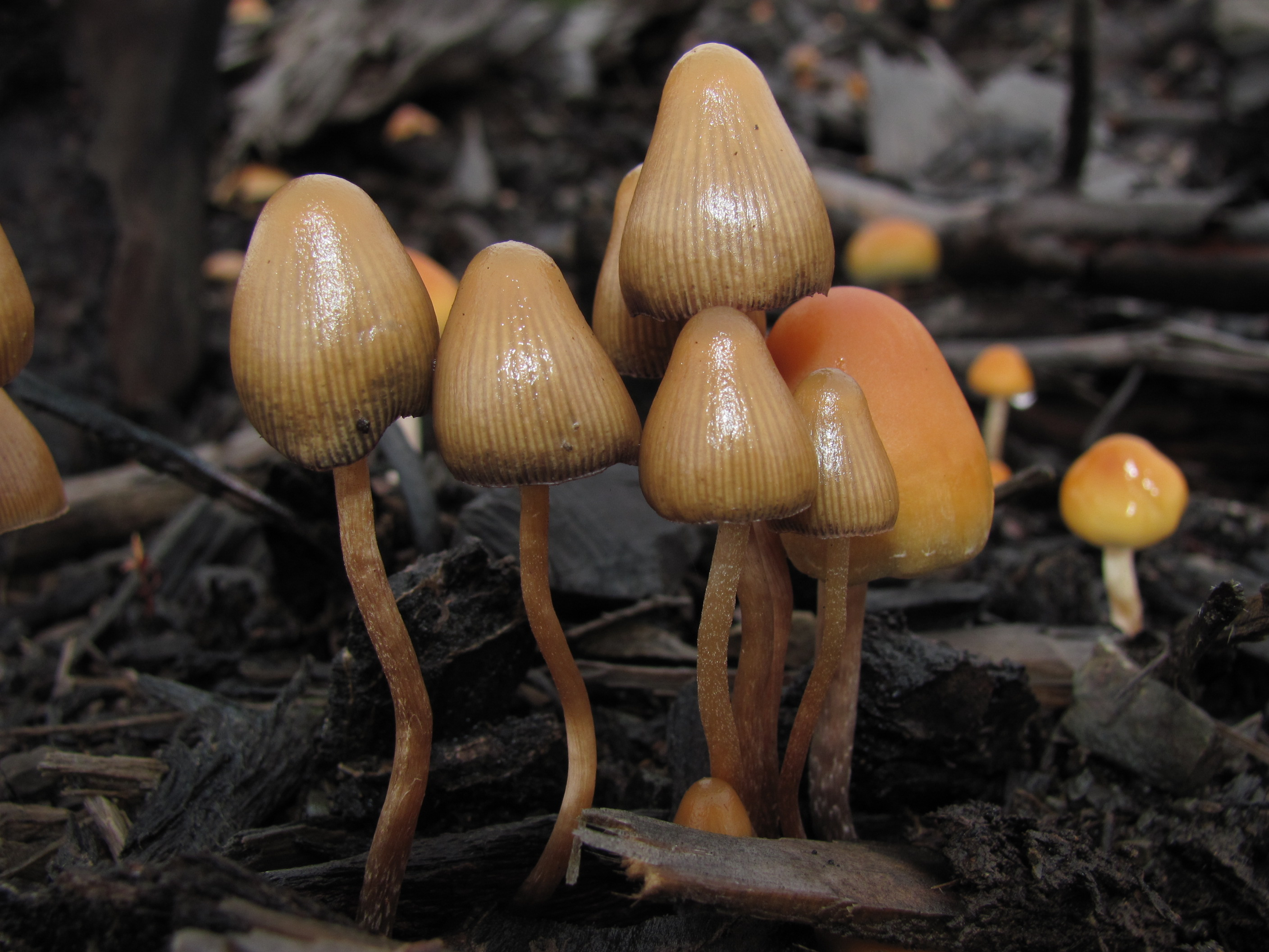 4 Reasons Investors Are Jumping on Psilocybin Mushrooms