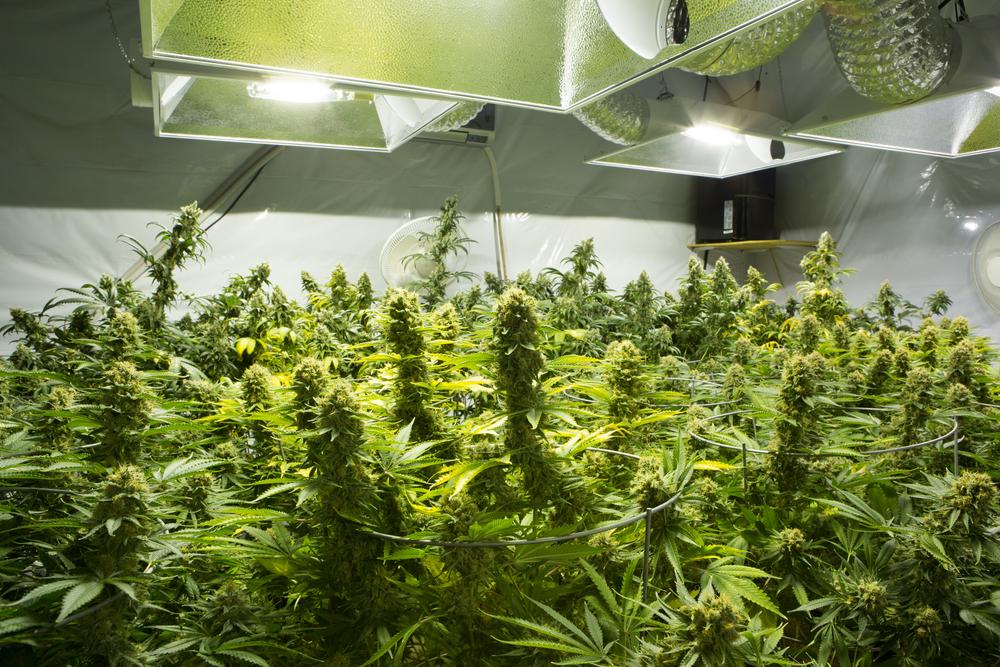 Michigan Marijuana Cards Dispensaries