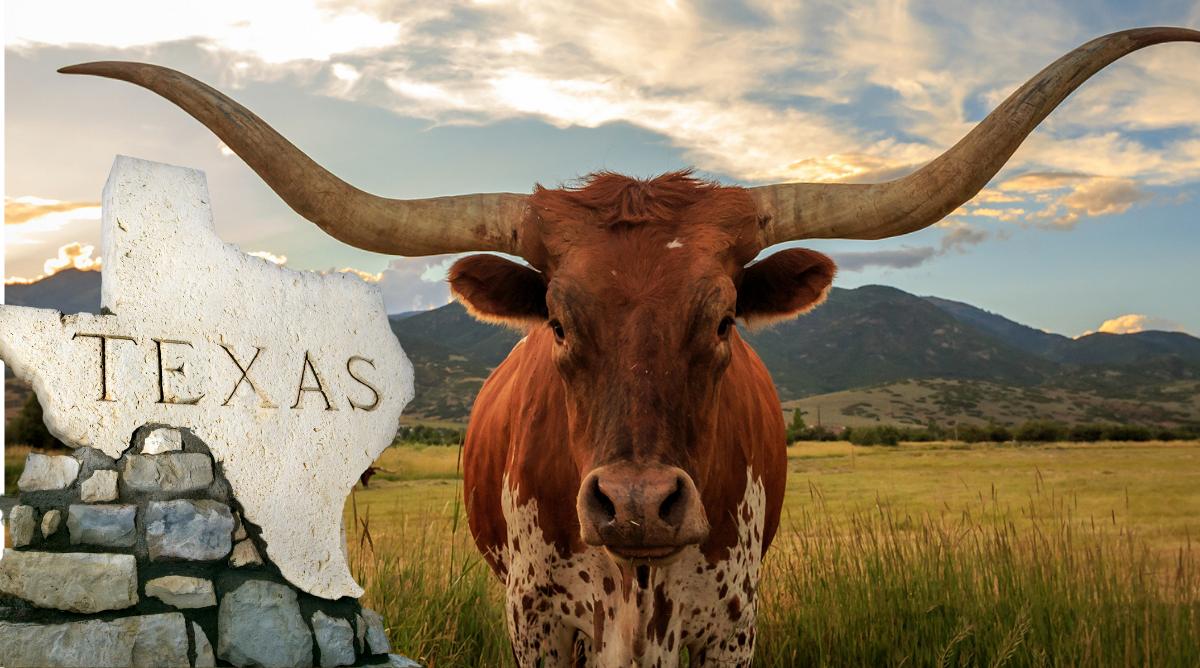 Texas marijuana law changes