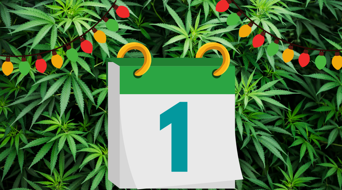 The 12 Days of Kushmas: A High Holiday Song