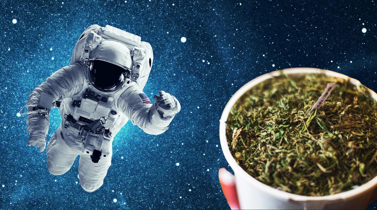 How to build space buckets cannabis home grow