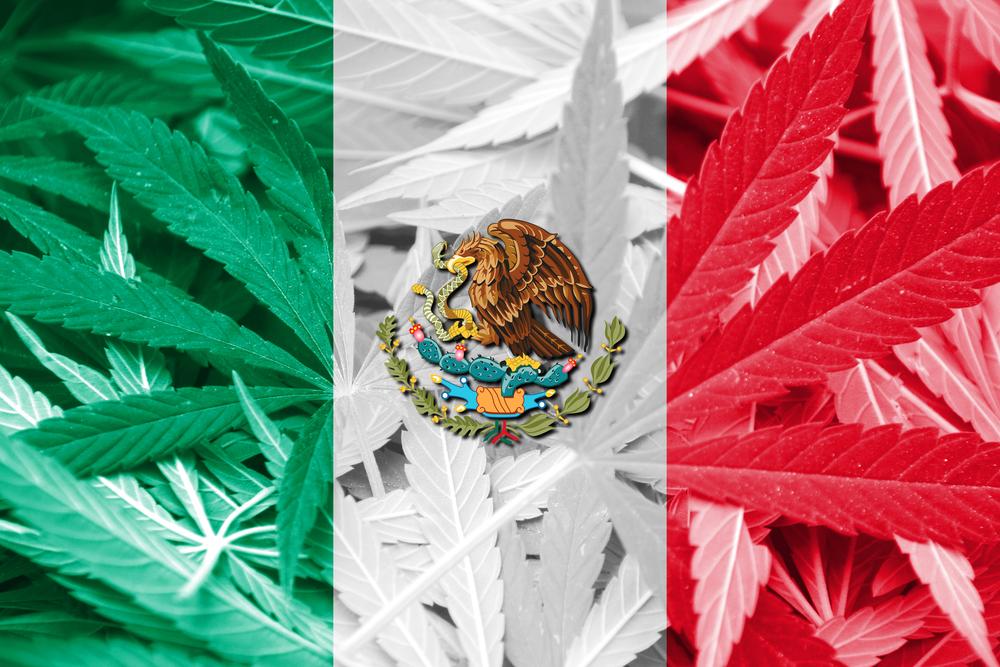 Mexico Cartels Cannabis