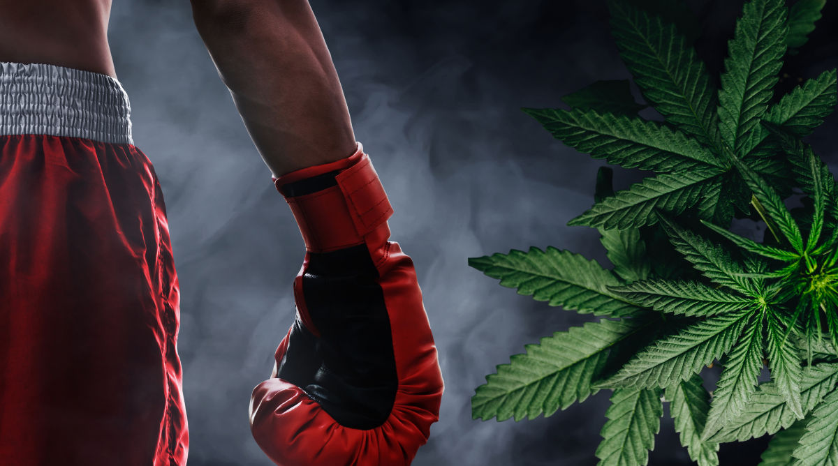Mike Tyson Sets Up a 'Knock Out' Cannabis Resort and Brand